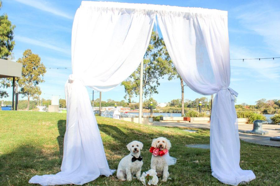 How to Include Your Dog in Your Wedding!