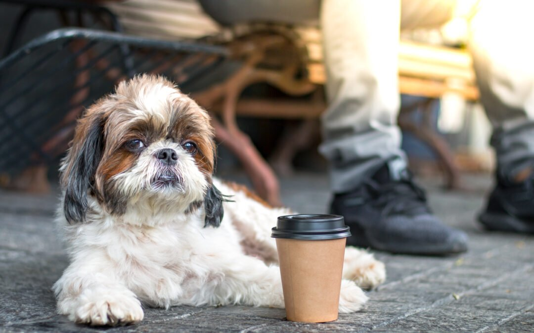 Share a coffee with your favourite four-legged friend